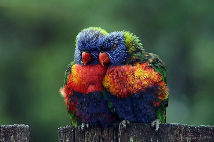 pajaros-colores-preciosos